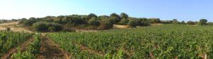 panoramica della vigna Jankara a San Leonardo